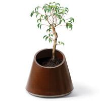 Eccentrica planter